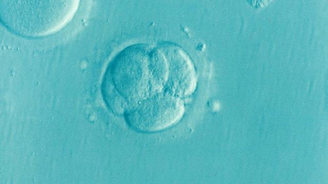Mitos y realidades de la reproducción asistida